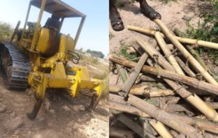 BAMBOO FOREST BULLDOZED YET AGAIN