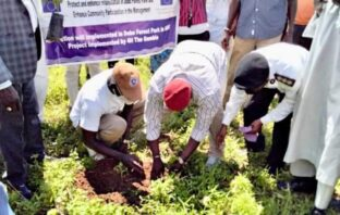 Environment Ministry Plants Over 6000 Seedlings at Dobbo Forestry Park